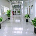 Trưng bày cây tại hành lang