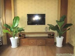 Trưng bày cây Đại Phú Gia trong phòng