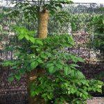 Chăm sóc cây để cây sinh trưởng và phát triển tốt
