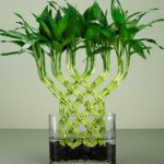 Trong phong thủy nếu trưng bày cây này trong nhà sẽ giúp mang lại nhiều năng lượng và mang lại sự may mắn