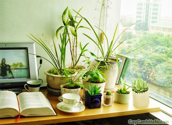 Các điều kiện tự nhiên có vai trò quan trọng trong kỹ thuật trồng hoa sen đá