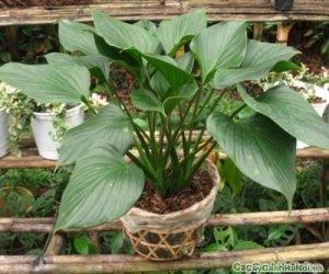 Cần có chế độ chăm sóc cây khoa học để cây sinh trưởng và phát triển tốt hơn
